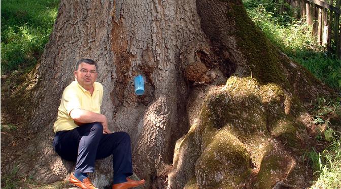 Razmišljanja Mikija Vukovića u hladu jasena pored Morave